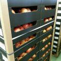 Zdjęcie: Owoce, warzywa, pieczarka na kraj i eksport, Bronisze